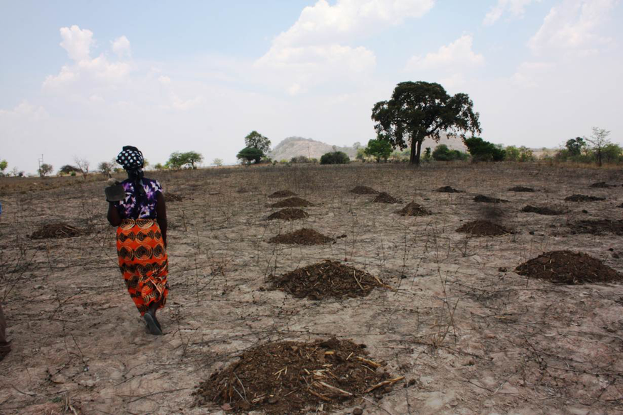 A woman farmer walks in a parched field with heaps of manure ready for planting in Zaka District, Masvingo Province, Zimbabwe, October 24. 2016