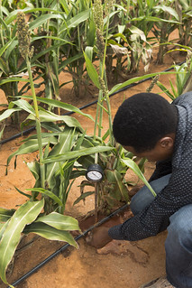 Ground truth: Digital innovations to improve soil health